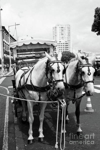 Wall Art - Photograph - Two Horses In The City by Gaspar Avila
