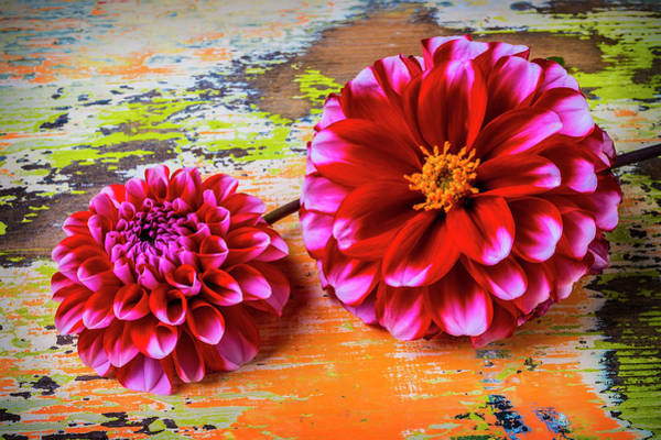 Wall Art - Photograph - Two Pink Dahlias by Garry Gay