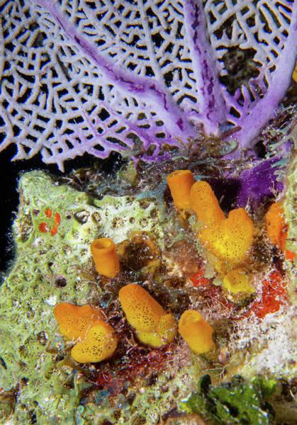 Photograph - Underwater Scenic by Jean Noren