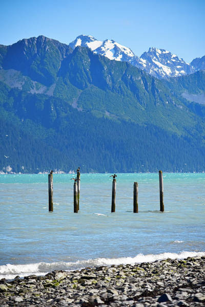 Cormorant Wall Art - Photograph - Usa, Alaska, Seward, Boat Harbor by Savanah Stewart