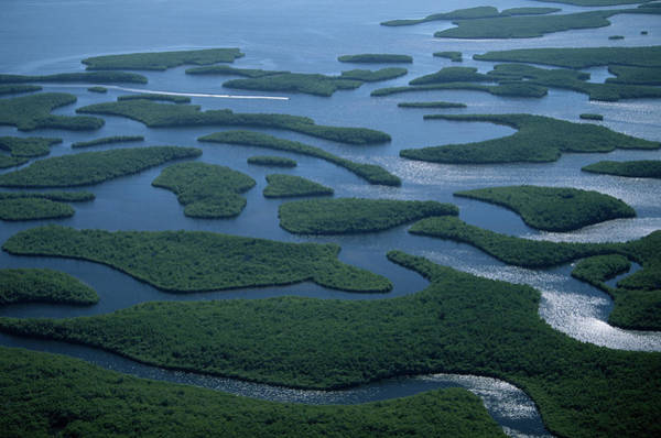 Airboat Photograph - Usa, Florida, Everglades National Park by Art Wolfe