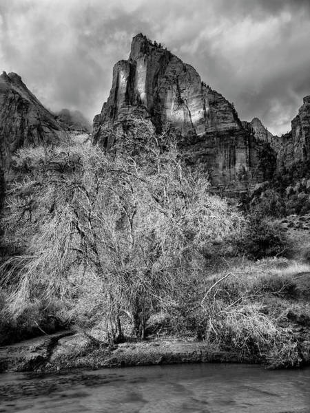 Wall Art - Photograph - Usa, Utah, Zion National Park by Ann Collins