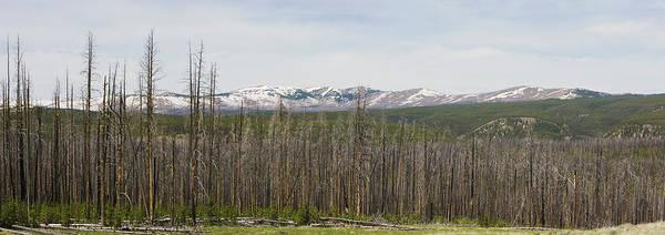 Wall Art - Photograph - Usa, Wyoming, Yellowstone National by Philip Nealey