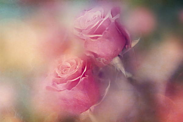 Wall Art - Photograph - Valentine's Day by Heike Hultsch
