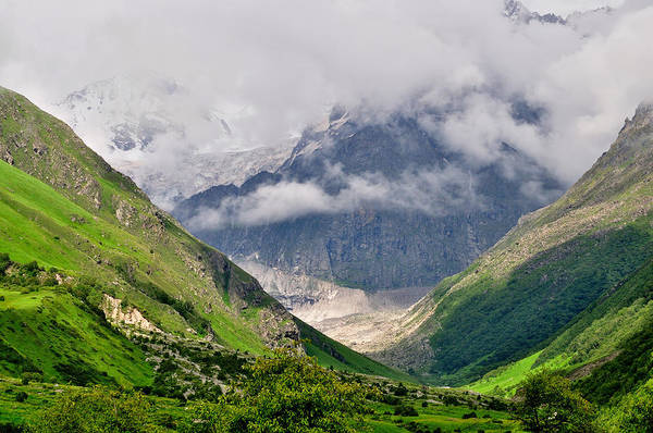 In The Grass Photograph - Valley Of Flowers Uttaranchal by The Travelling Slacker