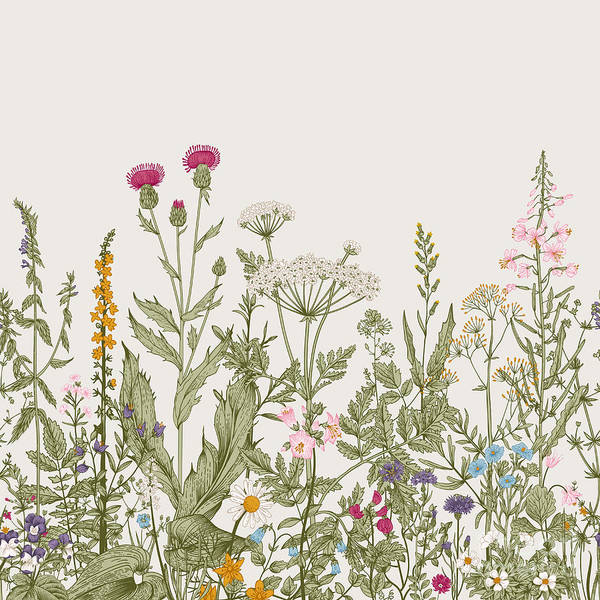 Wall Art - Digital Art - Vector Seamless Floral Border. Herbs by Olga Korneeva