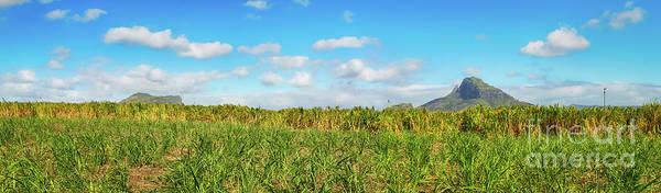 Wall Art - Photograph - View Of A Sugarcane And Mountains. Mauritius. Panorama by MotHaiBaPhoto Prints