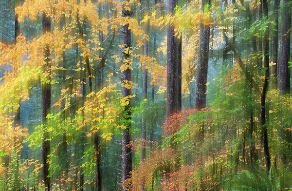 Wall Art - Photograph - Vine Maple And Big Leaf Maple In Autumn by Darrell Gulin