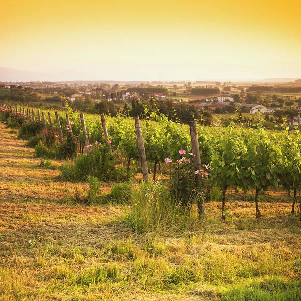 Sonoma County Photograph - Vineyard On Chianti Region Hills - Italy by Franckreporter