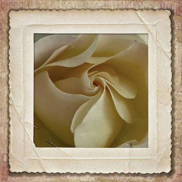 Photograph - Vintage Rose by Cathy Kovarik