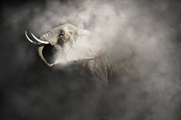 Amboseli Wall Art - Photograph - Vulnerable African Elephant In The Dust by Susan Schmitz