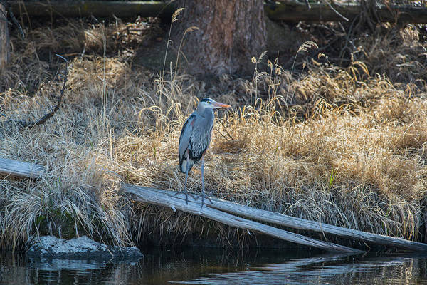 Photograph - B12 by Joshua Able's Wildlife