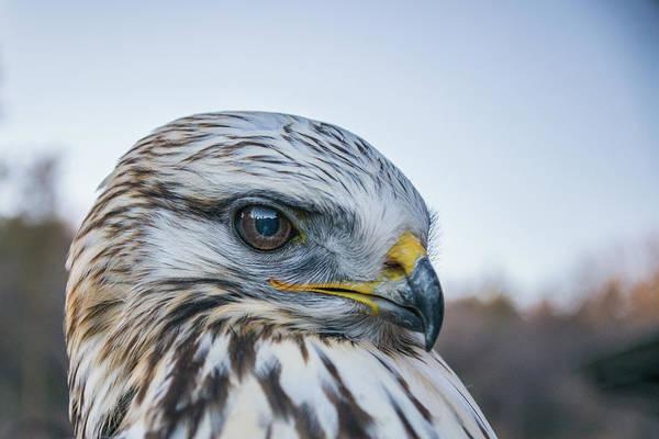 Photograph - B2 by Joshua Able's Wildlife