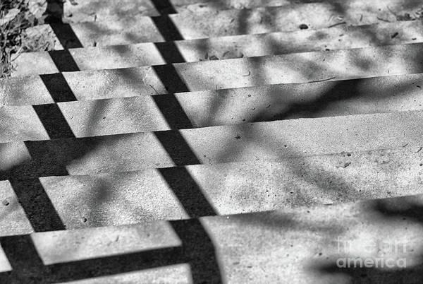 Photograph - Watch Your Step by Karen Adams