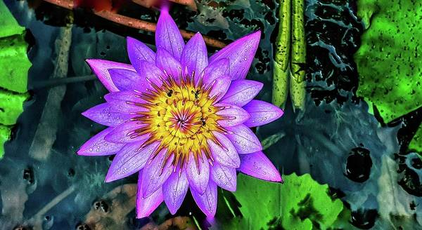 Photograph - Water Lily by AE collections
