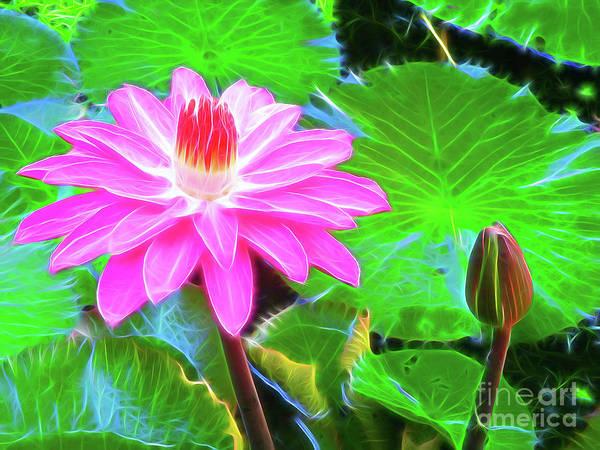 Wall Art - Photograph - Water Lily by Jerome Stumphauzer