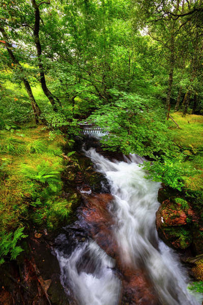 Photograph - Waterfall In The Forest by Debra and Dave Vanderlaan