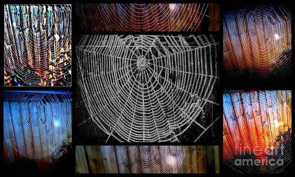 Photograph - Web Of Life by Joyce Woodhouse