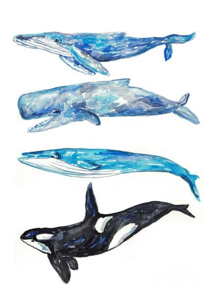 Cachalot Wall Art - Painting - Whale Watercolor Art by Maryna Salagub