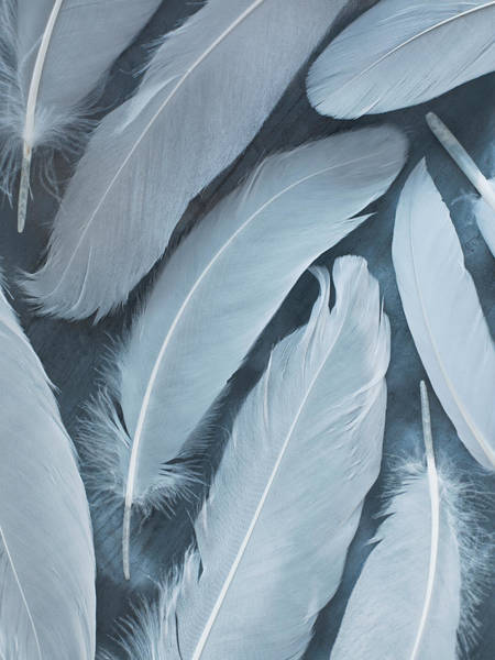 Fragility Photograph - White Feathers by Jana Leon