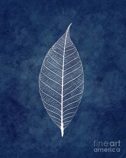 Wall Art - Photograph - White Leave On Blue by Delphimages Photo Creations
