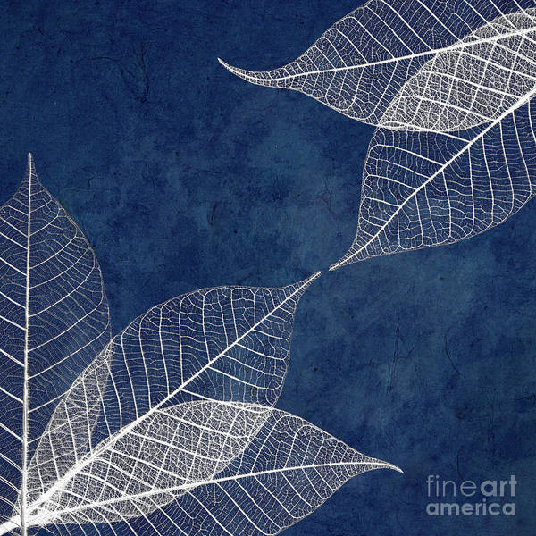 Wall Art - Photograph - White Leaves On Blue by Delphimages Photo Creations
