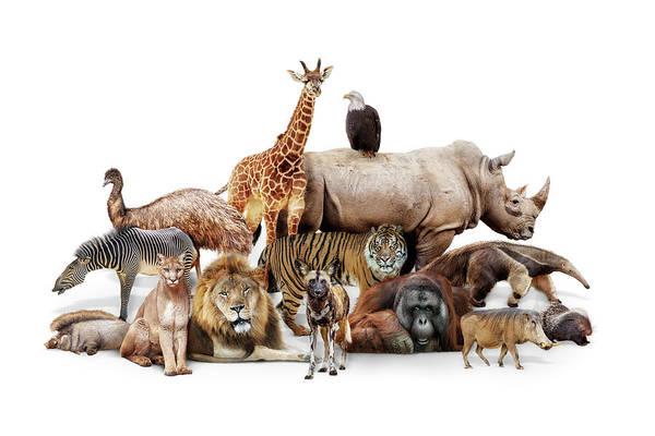 Photograph - Phoenix Zoo Animals by Susan Schmitz
