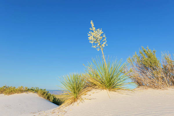 Wall Art - Photograph - White Sands Impression  by Melanie Viola