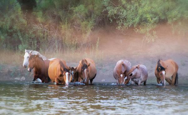 Wall Art - Photograph - Wild On The River  by Saija Lehtonen
