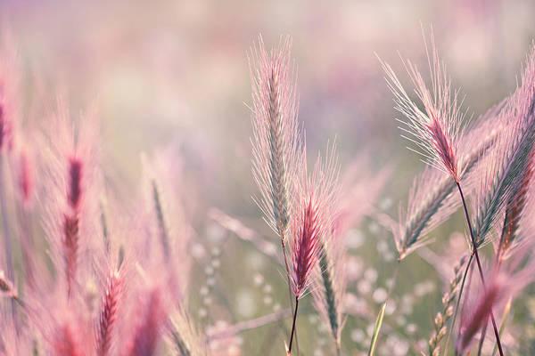 Ornamental Grass Photograph - Wildflower Background by Jasmina007