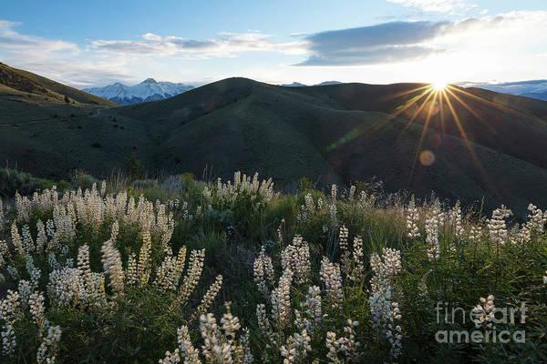 Wall Art - Photograph - Wildflower Dawn by Idaho Scenic Images Linda Lantzy