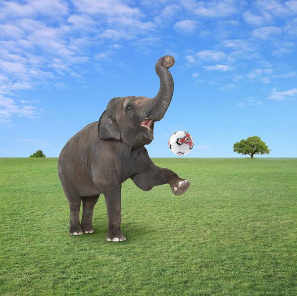 Photograph - Wildside Elephants by Bob Elsdale
