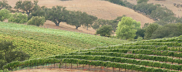 Napa Valley Photograph - Wine Country Scenic by S. Greg Panosian