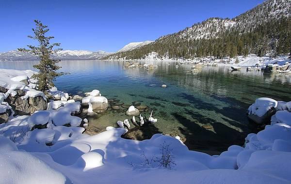 Photograph - Winter Abundance by Sean Sarsfield