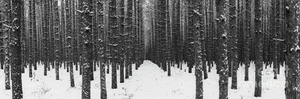 Wall Art - Photograph - Winter Forest Panorama by Twenty Two North Photography
