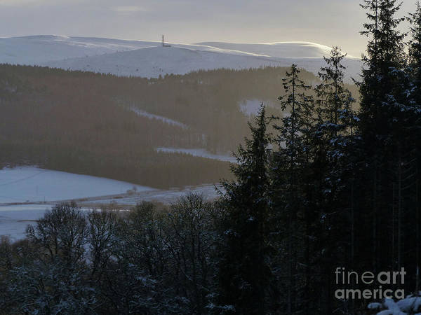 Photograph - Winter Forest by Phil Banks