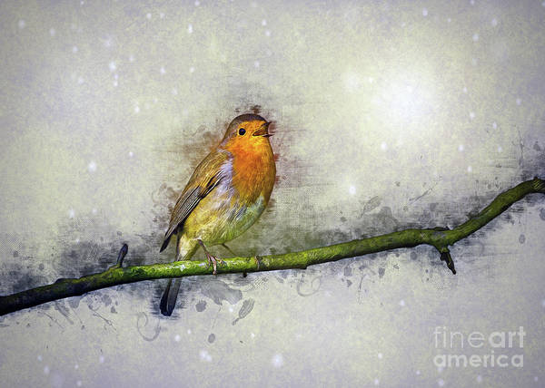 Beautiful Park Drawing - Winter Robin by Ian Mitchell
