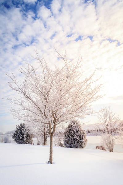 Wall Art - Photograph - Winter Scene In Central Kentucky by Alexey Stiop