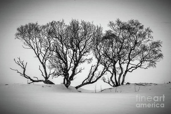 Expanse Photograph - Winter Trees by Inge Johnsson