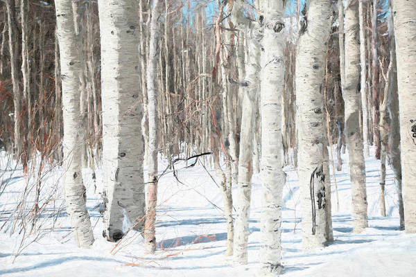 Wall Art - Photograph - Winter White by Donna Kennedy