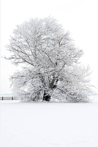 Wall Art - Photograph - Winter White by Mike Dawson