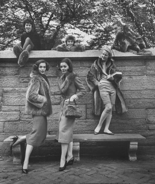Raccoon Photograph - Women Modeling Fashions Made With Racoon by Nina Leen