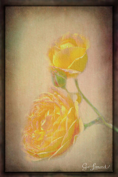Photograph - Yellow Roses by Susan Leonard