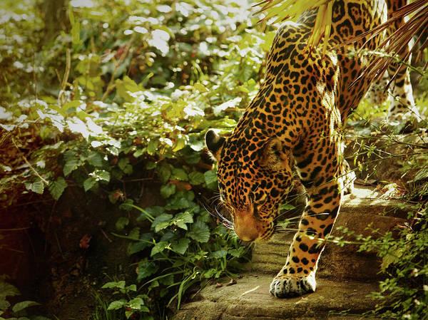 Wall Art - Photograph - Zoo Animals by Thomas Northcut