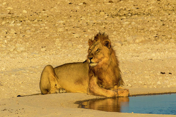 Wall Art - Photograph - Africa, Namibia, Etosha National Park by Hollice Looney