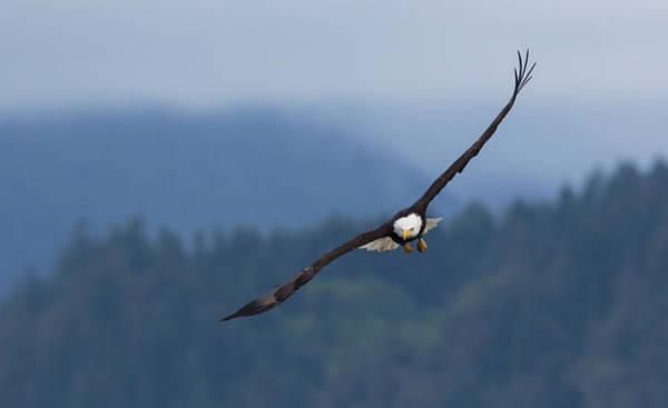 Wall Art - Photograph - Bald Eagle by Ken Archer