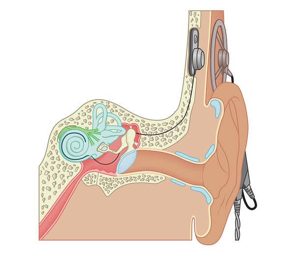 Cut-out Digital Art - Cross Section Biomedical Illustration by Dorling Kindersley