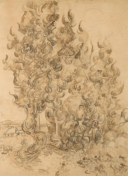Wall Art - Drawing - Cypresses by Vincent van Gogh
