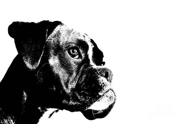 Wall Art - Digital Art - German Boxer Dog by Jana Behr