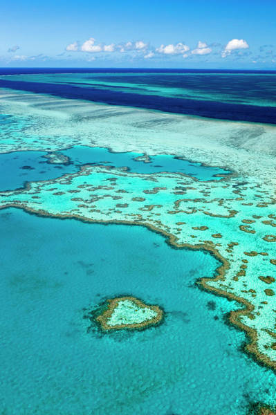 Reef Photograph - Great Barrier Reef by Andrew Watson